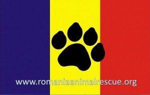 CAMPANIE DE STERILIZARE a câinilor/pisicilor cu stăpân, la Mangalia