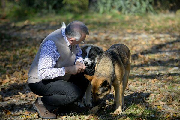 CAMPANIE DE STERILIZARE a câinilor și pisicilor cu stăpân de pe raza municipiului Mangalia